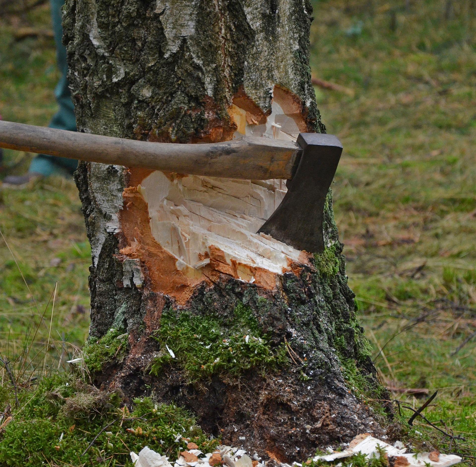 Bomen Op Erfgrens.Discussie Over Een Boom Bij De Erfgrens Kappen Nou Schenkeveld